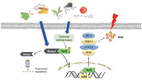 Antioxidant capacity of phytochemicals and their potential